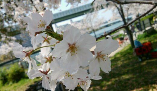 【2021年】大阪市都島区でお花見するなら通称パンダ公園で桜を楽しもう