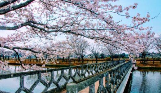 【2021年】茨城県土浦市でお花見するなら乙戸沼公園で桜を楽しもう