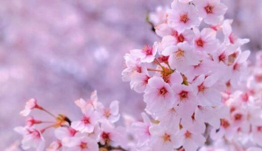 【令和3年】茨城県水戸市でお花見するなら桜山公園で桜を楽しもう