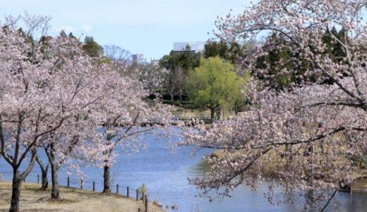 【2021年】茨城県つくば市でお花見するなら科学万博記念公園で桜を楽しもう